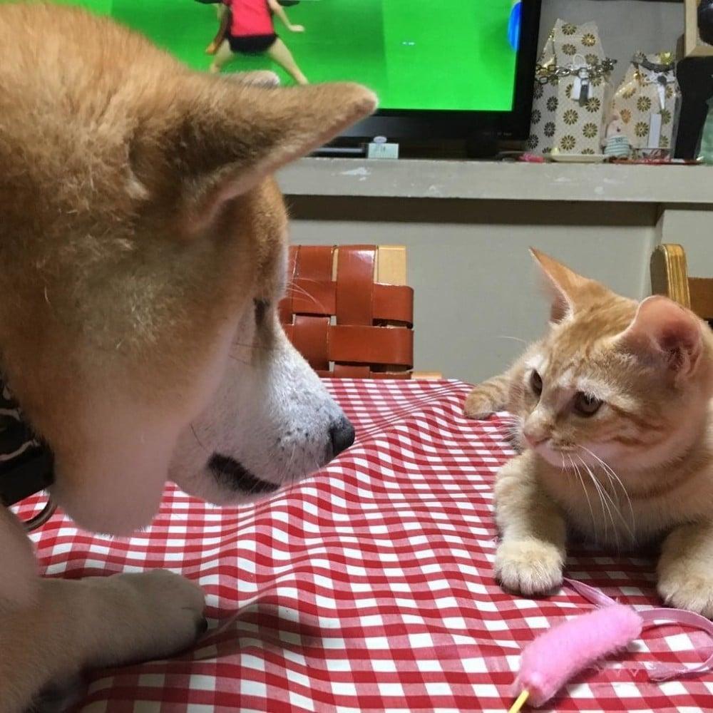 gaku y el gato