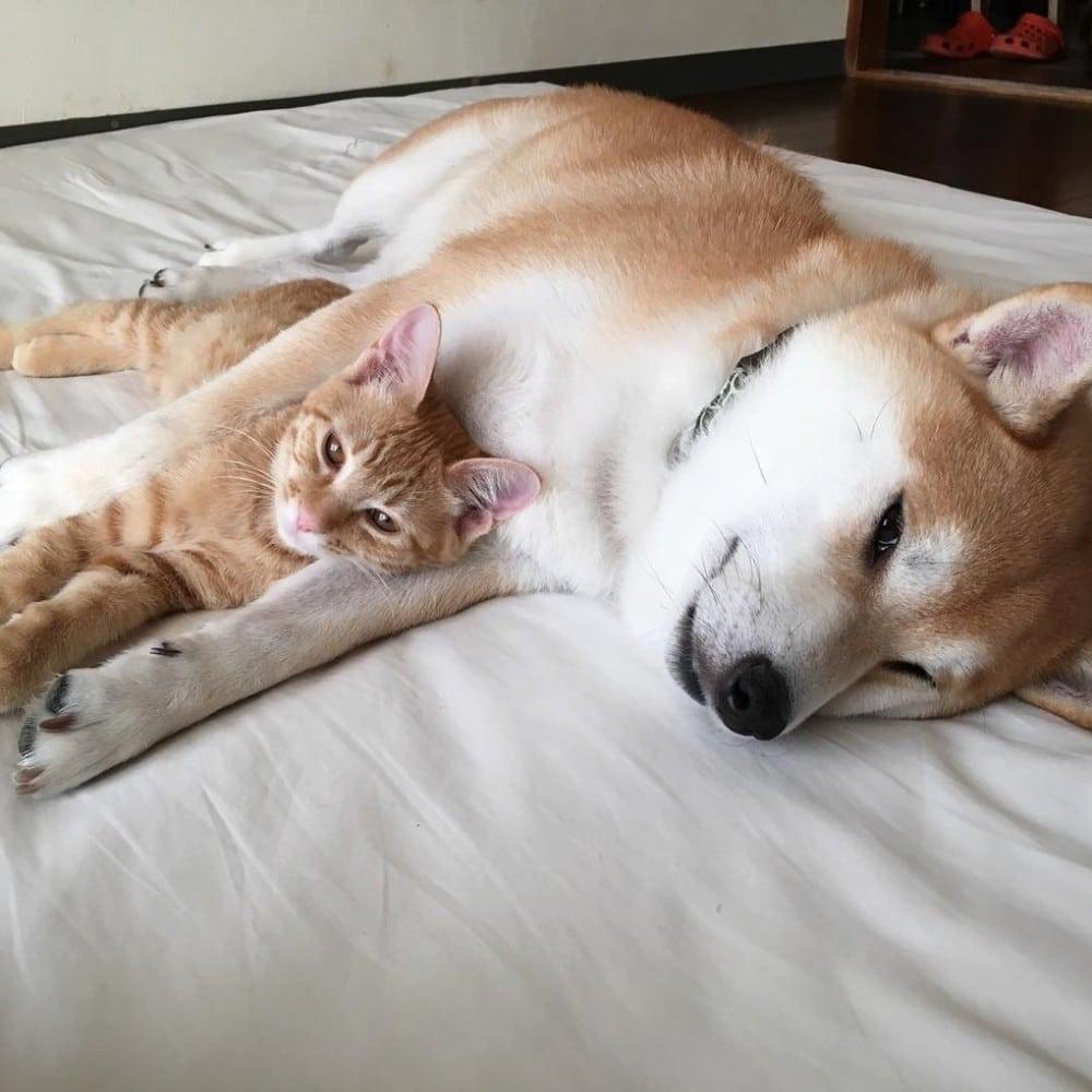 El pequeño Torajiro y gaku