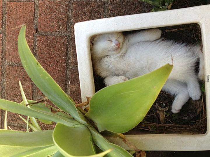 Katze in Blumentopf