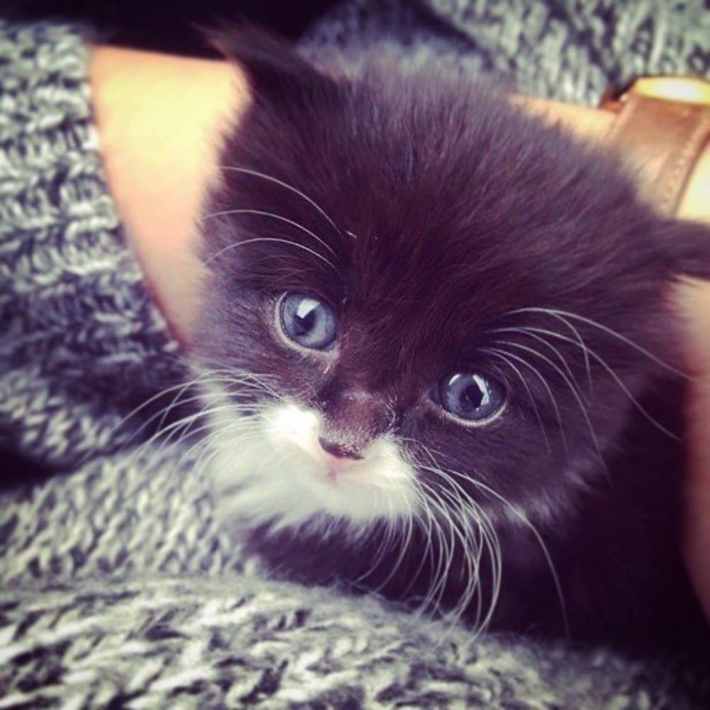 gatito rescatado ojos azules