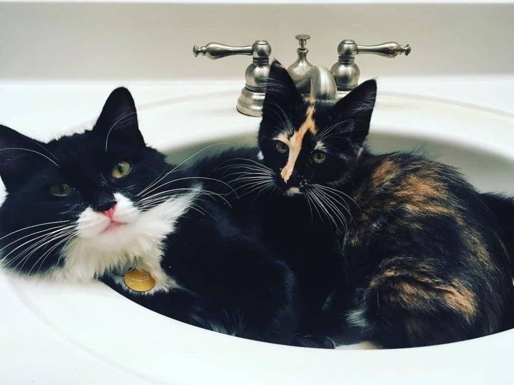 gatos en el lavabo