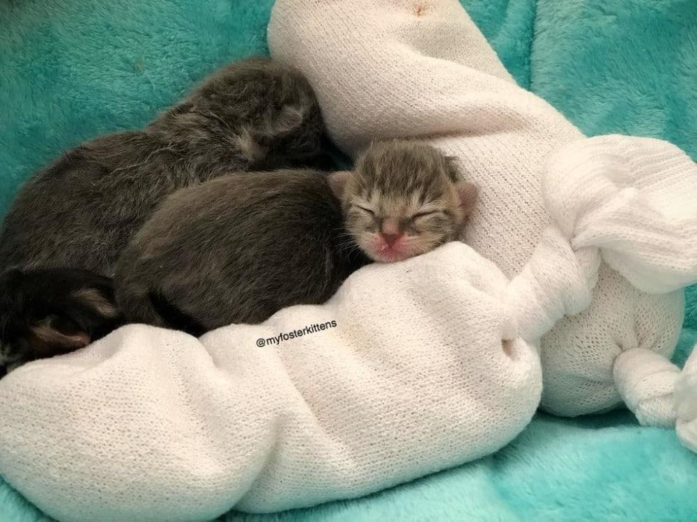gato abandonado por su madre
