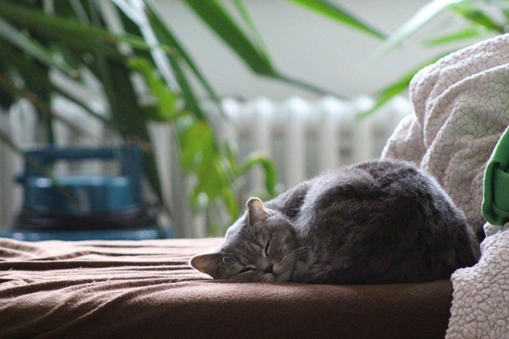 gato acostado en la cama