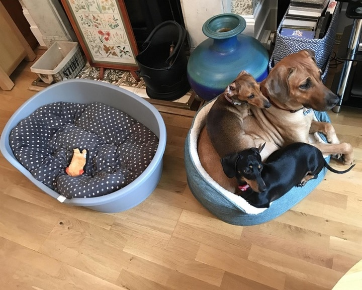 perros acurrucados amor