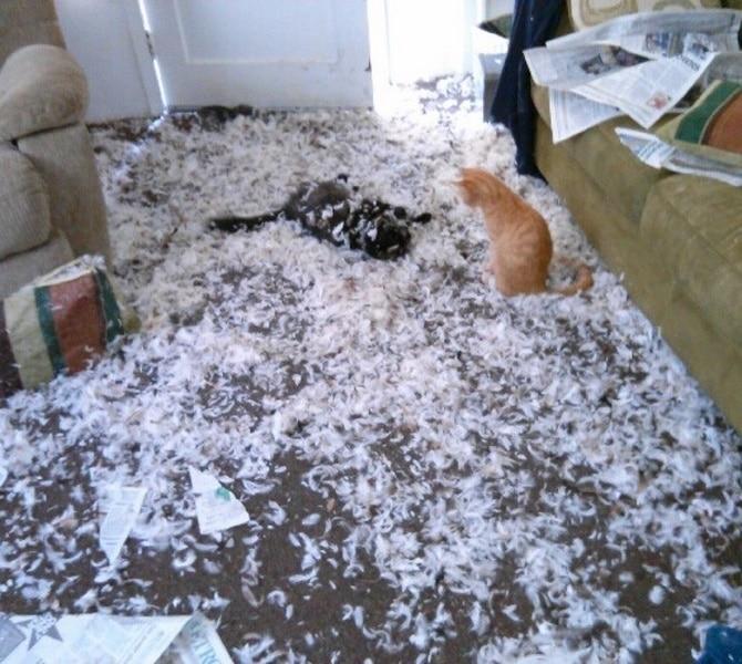 gato destrozando casa