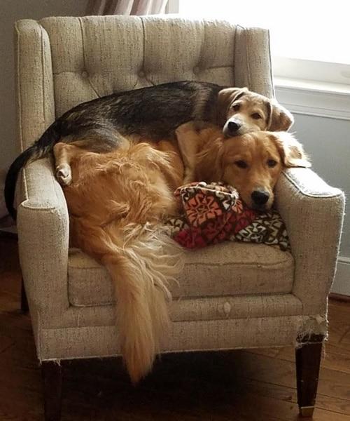 perros siesta