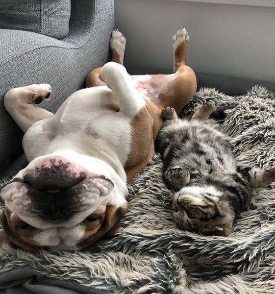 gato y perro yoga