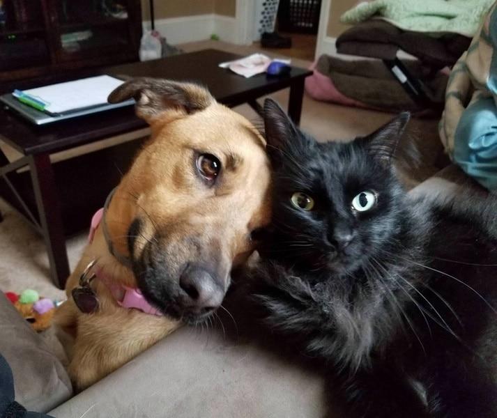 perro gato negro amor