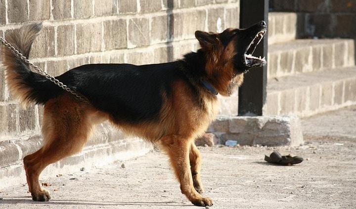 perro gruñidos