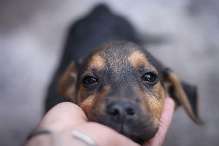 perro mirada