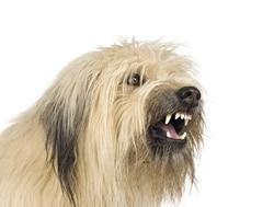 detectar rabia en los perros