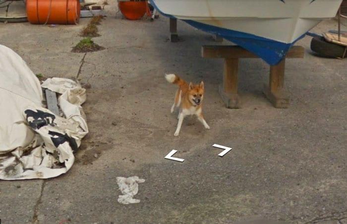 persecucion perro google street view