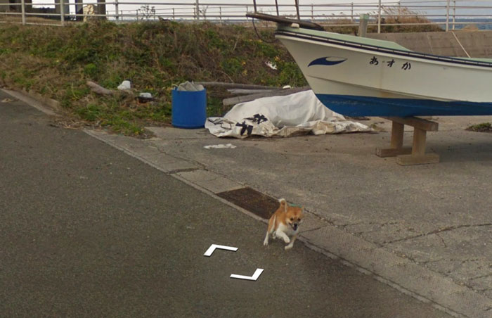 perro google street view corriendo