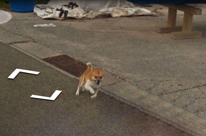 perro google street view detras de la camara