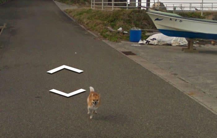 perro valiente google street view japon