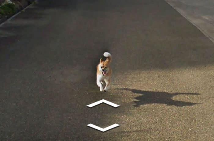 perro ejercitandose google street view