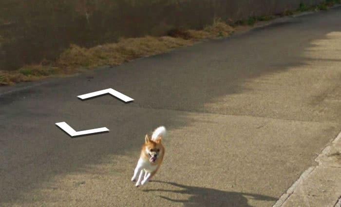 perro google street view detras de un coche