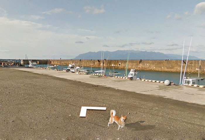 perro google street view puerto japon