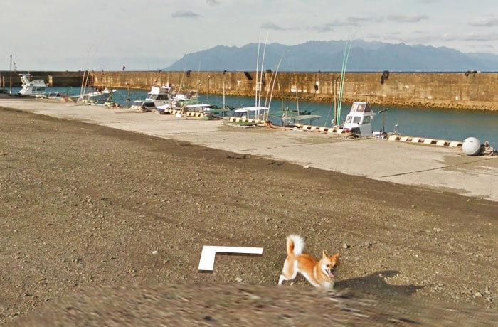 perro google street view viajero