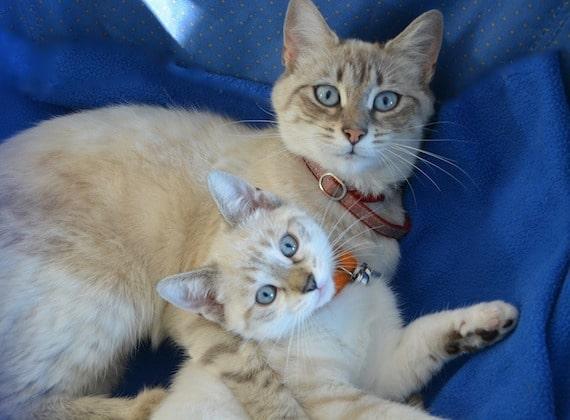 mamma-gatta-con-cucciolo