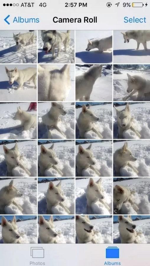 miles de perro movil