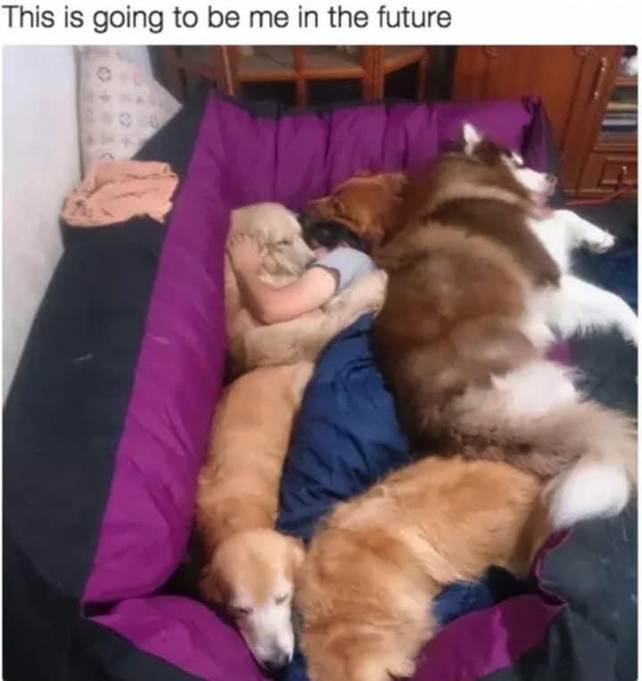 perros durmiendo en el sofá