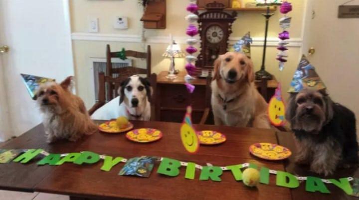 fiesta de cumpleaños perros