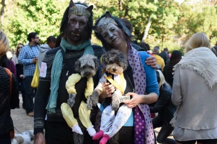 perros disfrazados en halloween