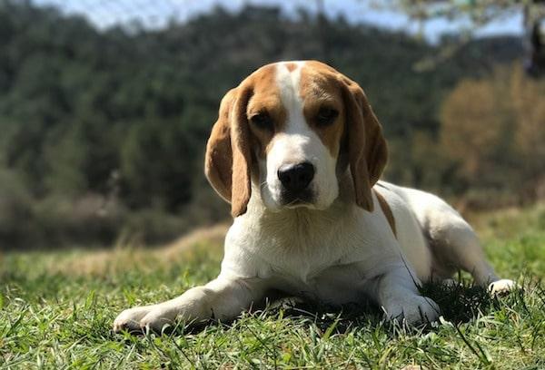 cane-in-adozione-sdraiato-sull-erba
