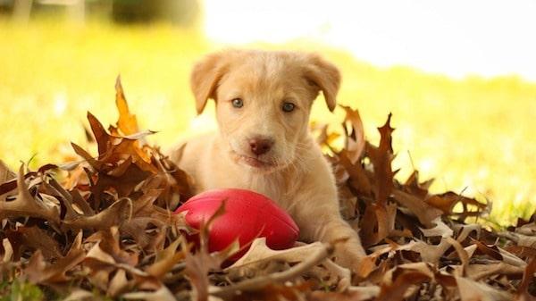 cucciolo di cane sulle foglie