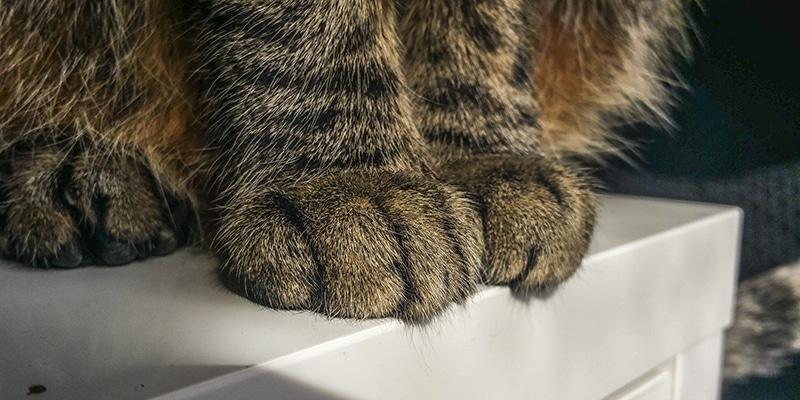 gato araña sofa uñas