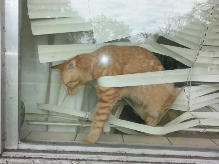 gato dentro de unas persianas