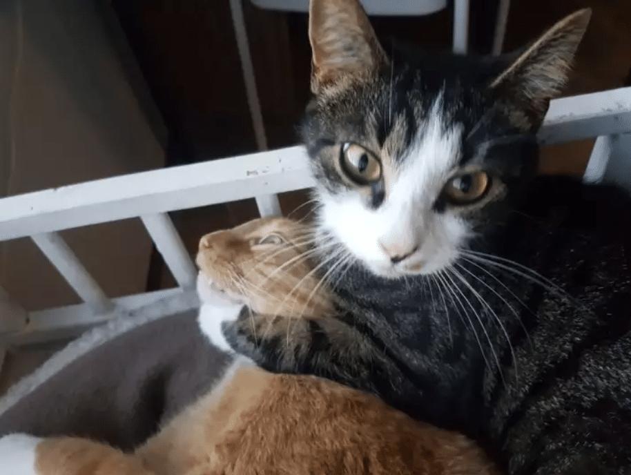 gato peleandose con otro gato