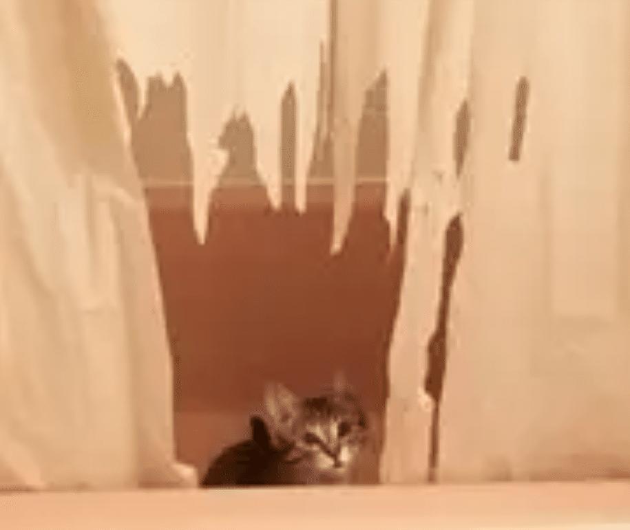 gato arañando cortinas