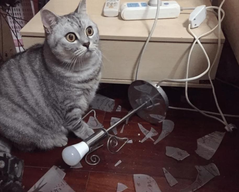 gato lampara rota