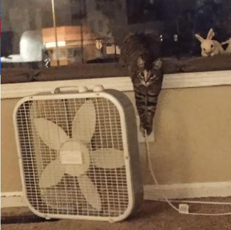 gato tirando de un cable