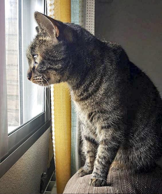 gato solo en casa mirando ventana