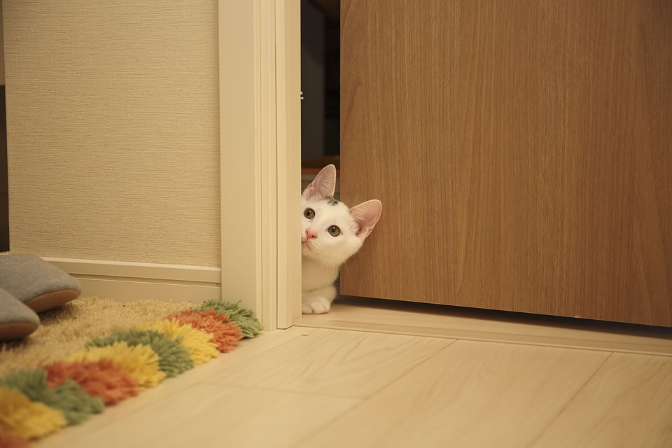gato solo en casa