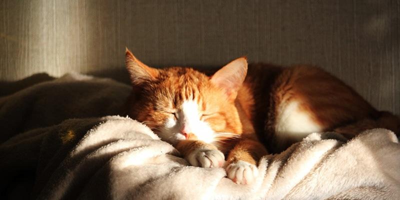 gato dormir sol