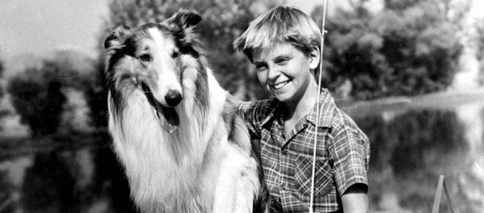 lassie perros pelicula