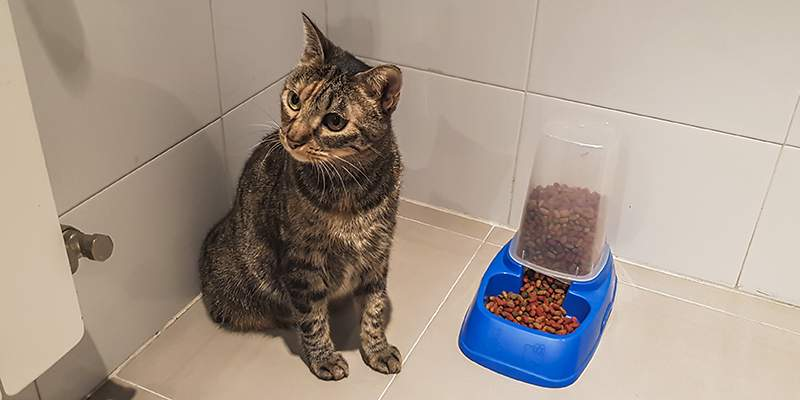 gato con comedero