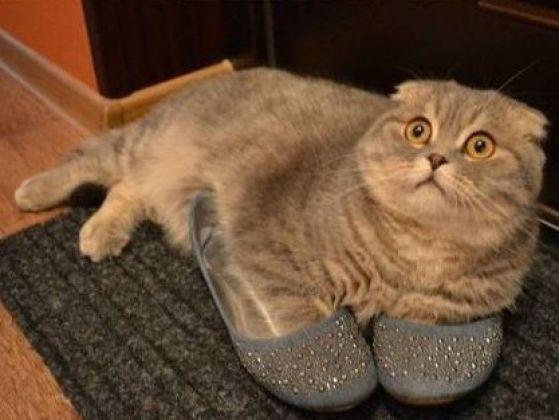 postura del gato ladron