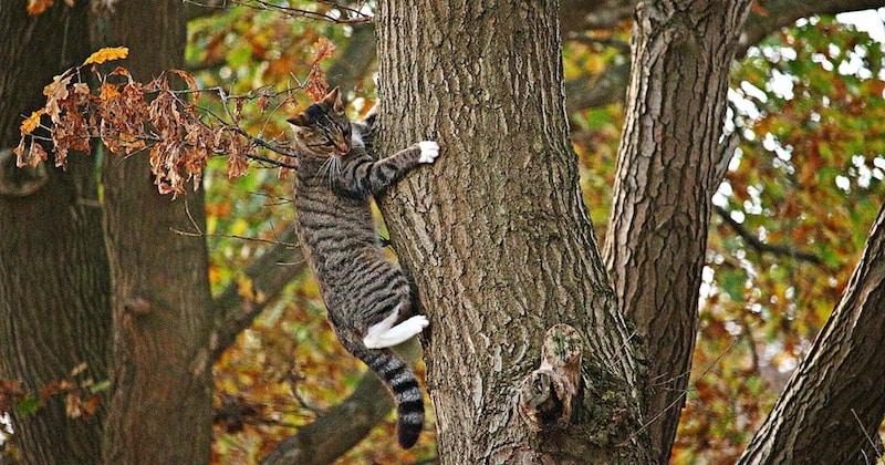 Gatto-si-arrampica-su-albero