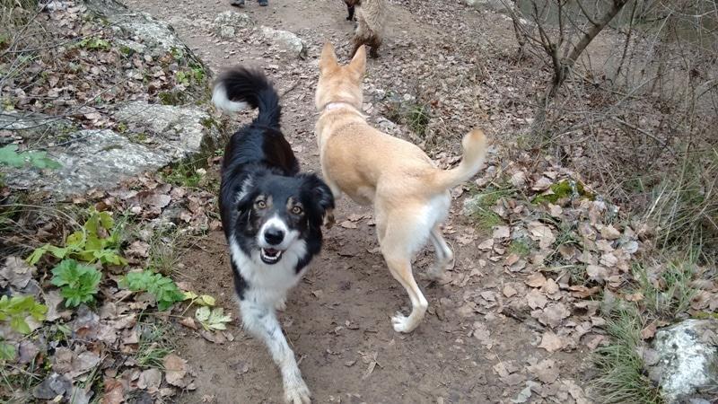 perros adoptados felices bosque