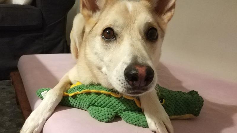 perro adoptado triste
