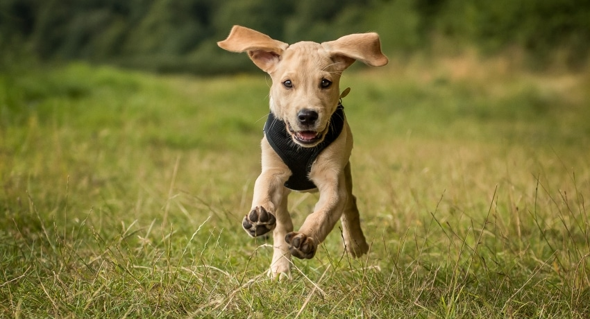 arnes perro