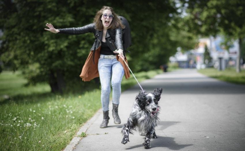 collar o arnes para perro paseo