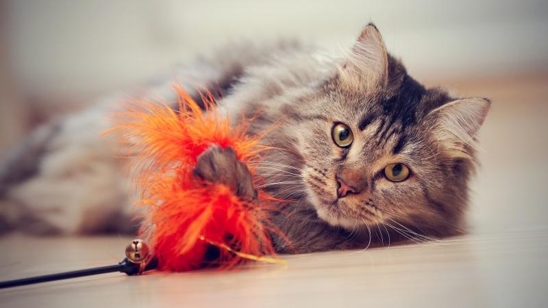 Un gato se entretiene con un juguete.