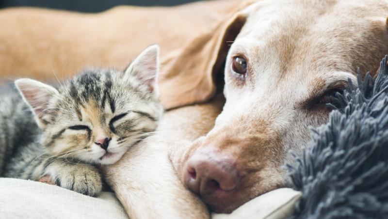 perro y gato adoptados casa