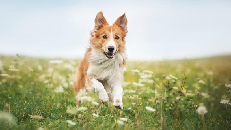 adoptar un perro feliz